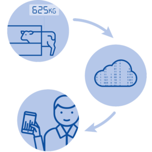 Weighing process - Big data collection